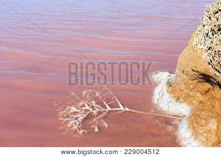Water Surface Of Pink Extremely Salty Syvash Lake, Colored By Microalgae. And Small Dead Plant Cover