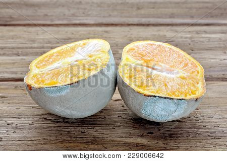 Spoiled Orange Is Cut Into Two Parts. Fruit Is Infected With Mold