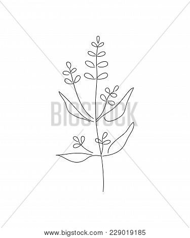 Vector Illustration Of Sage With Flower Isolated On White Background.