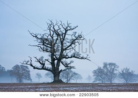 Lone Tree In A Frosty Field At Twilight