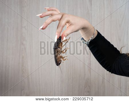 Fingers of a female hand with disgust holding a big nasty cockroach poster