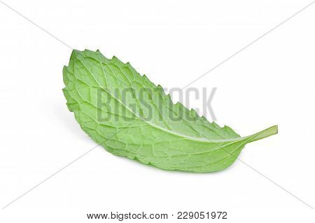 Behind The Single Fresh Mint Leaf Isolated On White Background