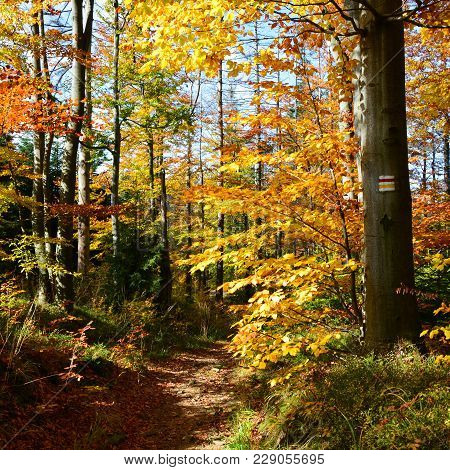 Trail In The Mountains, Autumn Deciduous  Forest