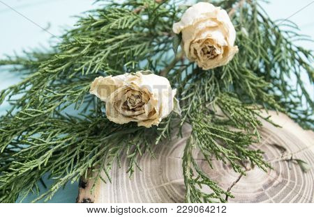 Dried Roses, Juniper Branches And Cut Wood On Turquoise Background