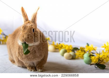 Bunny Rabbit Munches On Fresh Spinach Leaves Surrounded By Flowers For Spring And Easter