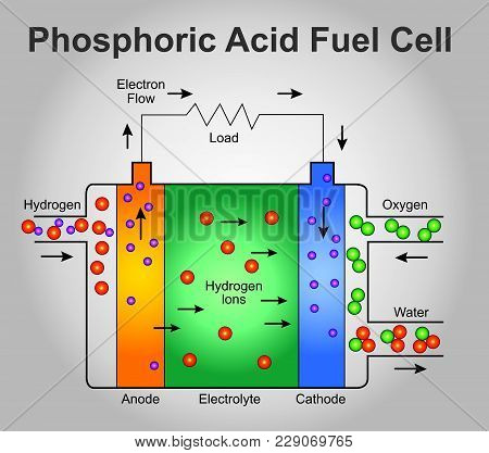 Phosphoric Acid Fuel Cell Structure. Education Technology Info Graphic.