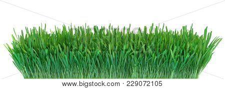 Green Grass. Natural Grass Texture Pattern Background. Meadow. Spring, Summer Season. Plant Growth 3