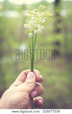 A Bouquet Of Lilies Of The Valley In A Woman's Hand.