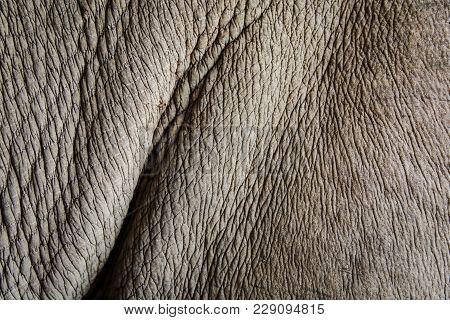 Close-up Of Rhinoceros (diceros Bicornis )skin Texture.