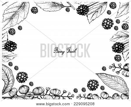 Berry Fruits, Illustration Frame Of Hand Drawn Sketch American Beautyberry Or Callicarpa Americana A