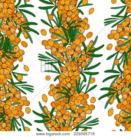 Seamless Sea Buckthorn Pattern. Endless Wallpaper. Ornament With Autumn Berries. Vector Seaberry