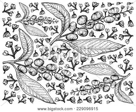 Berry Fruit, Illustration Wall-paper Background Of Hand Drawn Sketch Of Fresh American Pokeweed, Sim
