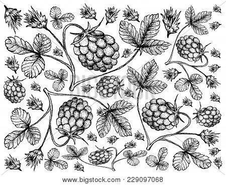 Berry Fruit, Illustration Wall-paper Background Of Hand Drawn Sketch Of Fresh Arctic Bramble, Arctic