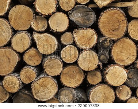 Chopped Firewood. Background  Of Firewood Stacked And Prepared For Winter. Close Up Pile Of Wood Log