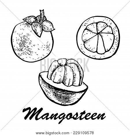 Hand Drawn Mangosteen. Mangosteen Fruits Isolated On White Background.