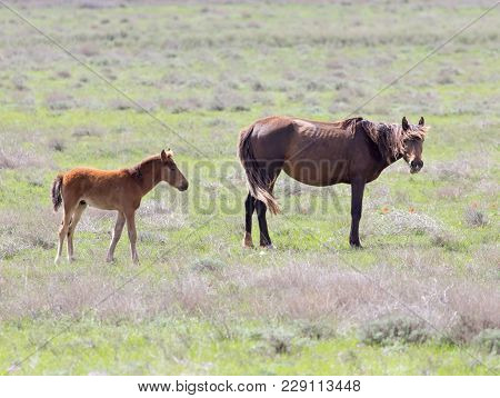 Horse On Pasture . In The Park In Nature