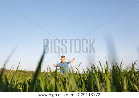 Joyful Little Cute Child Baby Boy Walk On Green Grass Field Wheat Background, Rest, Have Fun, Play,