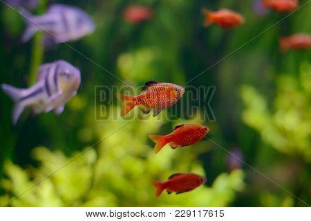 Beautiful Fish In The Aquarium, Aquarium, A Fish On The Background Of Aquatic Plants
