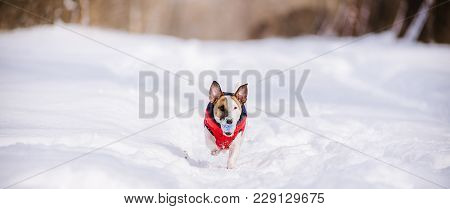 Dog Rushing Through Deep Snow With Colorful Toy In Mouth