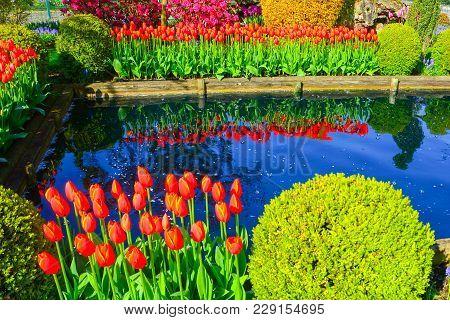 Tulip Farm In Skagit Valley, Washington, Showing Off Its Crop