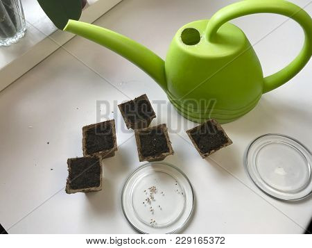 Accessories For Growing Seedlings At Home. On A Plate Lie Tablets Of Peat, Filled With Water To Soft