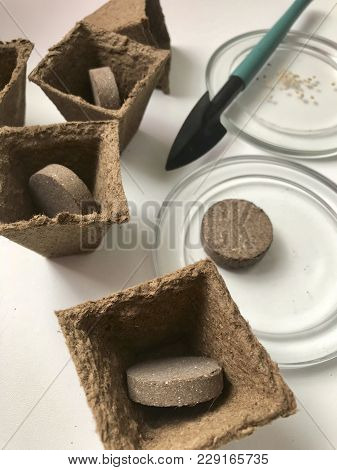 Accessories For Growing Seedlings At Home. Peat Pots With The Earth In The Form Of Tablets Inside. N