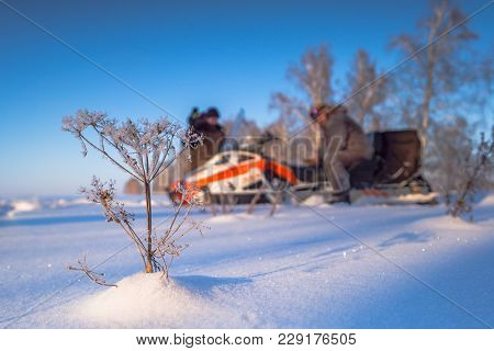 Man On Snowmobile. Recreation Concept On Nature In Winter Holidays. Winter Sports. Driver Of A Snowm