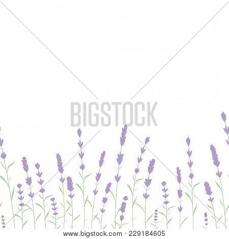 Lavender Card Border Vector. Vintage Label With Lavender Fragrance. Detailed Botanical Banner Of Org