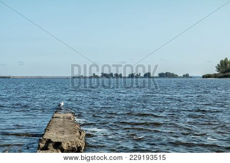 Amazing River Landscape Whits Larus Herring Gull