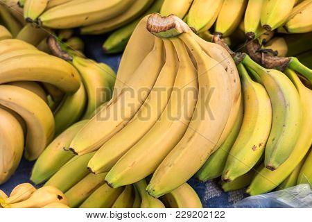 Fresh Bananas Sold At City Farmers Market