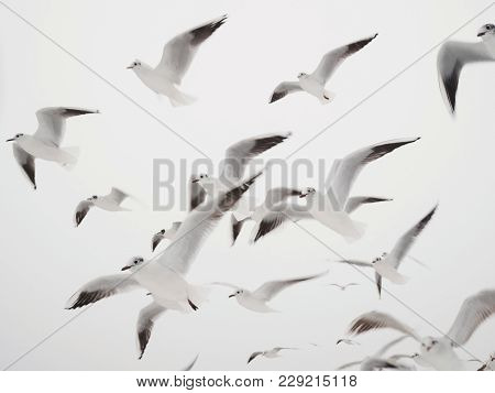 Gulls Flying At The Beach, Sky In Winter. Minimalism