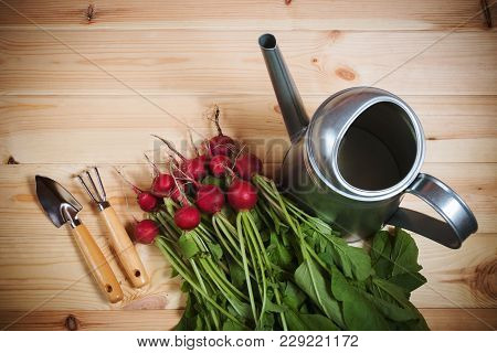 Fresh Ripe Radish, Watering Can And Gardening Tools On Wooden Background. Top View.