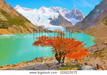 Autumn Tree By The Lake Near Cerro Torre Mountain. Los Glaciares National Park. Argentina.