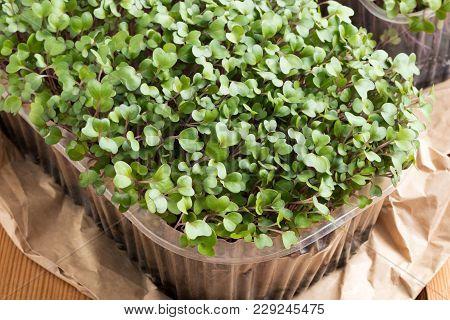 Homegrown Broccoli And Kale Microgreens On A Table