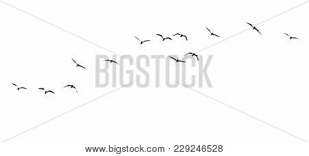 Silhouette Of A Flock Of Birds On A White Background .