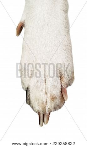 White And Black Dog Paw Isolated On White Background