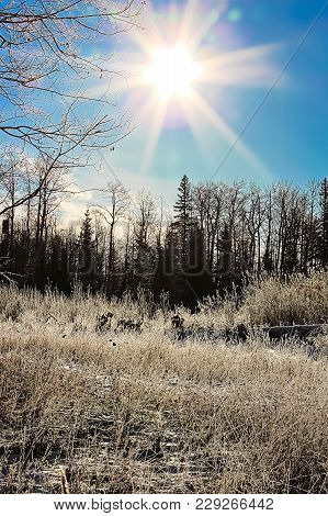 Morning Sunlight In Grass In Hoar Frost Covered Forest.