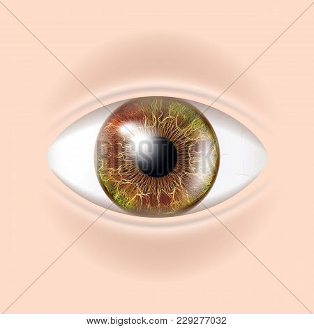Human Eye Vector. Sight, Eyesight. Body Care. Realistic Detail Vision Illustration