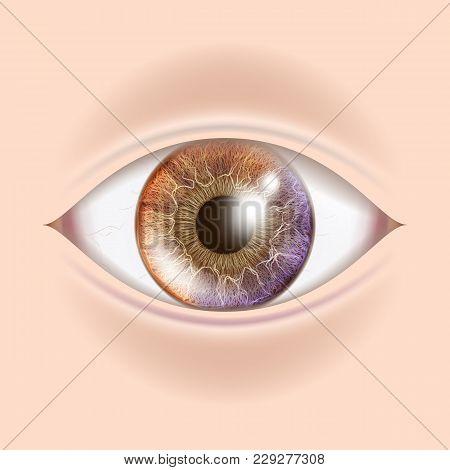 Human Eye Vector. Visual Examination. Body Check. Realistic Anatomy Illustration