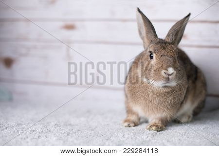 Adorable Little Rabbit Enthusiastically Looking In The Shot