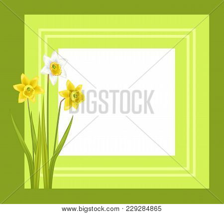 Greeting Card With Framing Daffodil Narcissus Bulbous Plant, Flowers With White Outer Petals And Yel