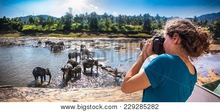 PINNAWALA, SRI LANKA - DEC 25, 2016: Beautiful girl taking a photo of elephants bathing in the river near Pinnawala on Dec 25, 2016, Sri Lanka.