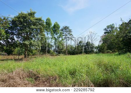 Grass Field In Nature Country At Nakhon Nayok , Thailand