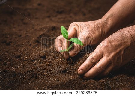 Hands Of Farmer Growing Plant A Tree Natural Background,plant A Tree Growing Plant The Soil And Seed