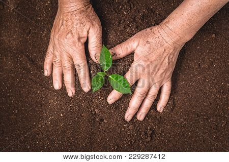 Plant A Tree Growing Plant The Soil And Seedlings In The Old Hand