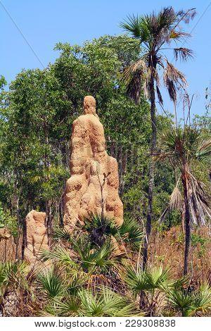 Termite Hill In The Outback Of Australia.