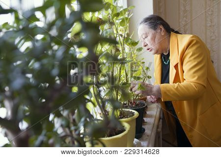 Old Lady In The Yellow Jacket At The Window With Flowers, Active Ageing