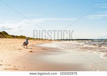 Brackley Beach In Prince Edward Island National Park (prince Edward Island, Canada)