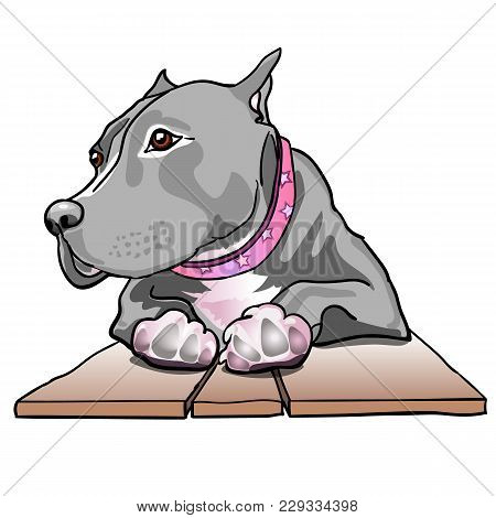 Breed Staffordshire Terrier Dog Laying Down On Wooden Board. Dog Paws. Vector Illustration.