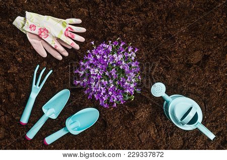 Gardening Tools On Fertile Soil Texture Background Seen From Above, Top View. Gardening Or Planting